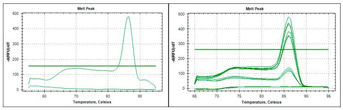 Curva de temperatura de denaturación del producto de amplificación de qPCR asociado con la bacteria causante de la escaldadura de la hoja Xanthomonas albilineans (Izq.) y  del raquitismo de la soca Leifsonia xily subsp xily (Der.).